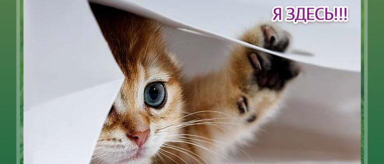 Как пристроить котёнка в хорошие руки