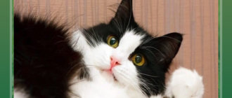 Короткие истории про кошек