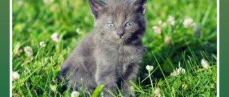 Подобрали котёнка