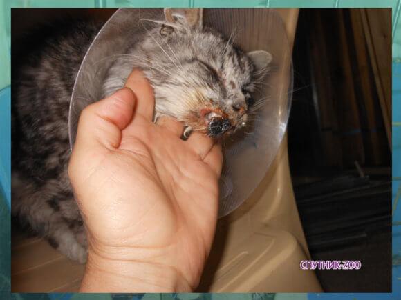 У котика отрываются губы